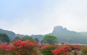 榛名山のスルス岩周辺 ツツジ 霧の写真素材 [FYI03742530]