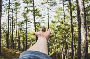 Cropped hand of young man holding pine cone against trees at forestの写真素材 [FYI03742591]
