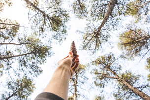 Low angle view of cropped hand holding pine cone against trees at forestの写真素材 [FYI03742593]