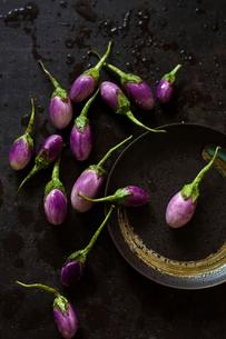 High angle view of eggplants on wet metallic tableの写真素材 [FYI03743046]