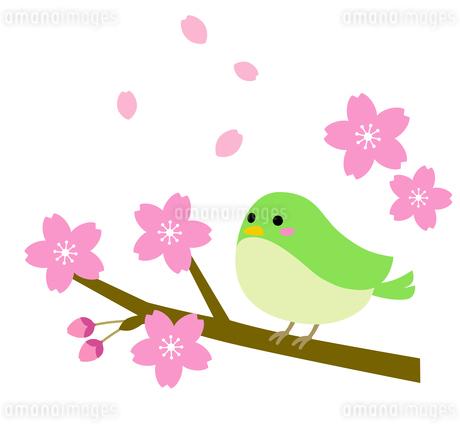 桜と鶯のイラストのイラスト素材 [FYI03744038]