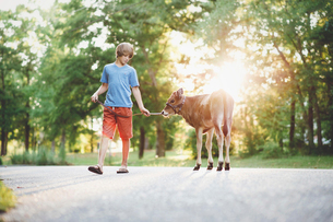 Boy with calf walking on footpath against trees at parkの写真素材 [FYI03746401]