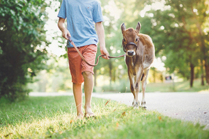 Low section of boy with calf walking on grassy field against trees at parkの写真素材 [FYI03746411]