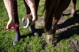 Low section of woman cleaning horse's hoof on field during sunny dayの写真素材 [FYI03747491]