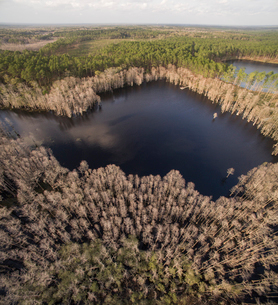 Aerial view of lake amidst trees at Pine Log State Forestの写真素材 [FYI03747982]