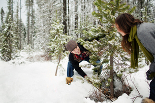 Happy boyfriend looking at girlfriend while cutting pine trees in snow covered forestの写真素材 [FYI03748258]