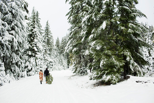 Rear view of couple with pine tree walking on snow covered field in forestの写真素材 [FYI03748266]