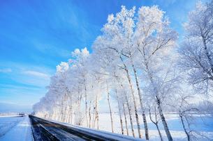 霧氷と青空の写真素材 [FYI03748943]