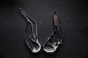 Overhead view of broken glass on tableの写真素材 [FYI03749299]
