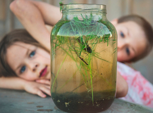 Curious siblings looking at small catfish in jar on tableの写真素材 [FYI03749361]