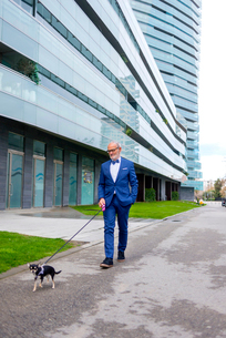 Senior man in suit walking with Chihuahu on road against buildingの写真素材 [FYI03749746]