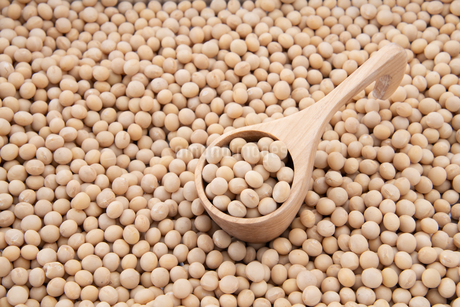 Soy bean as food backgroundの写真素材 [FYI03751212]