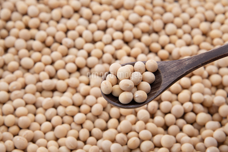 Soy bean as food backgroundの写真素材 [FYI03751248]