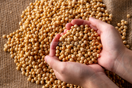 Soy bean as food backgroundの写真素材 [FYI03751551]