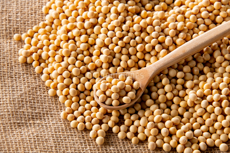 Soy bean as food backgroundの写真素材 [FYI03751822]