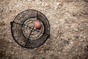 Overhead view of brown egg in metal bucket on sawdust heapの写真素材 [FYI03752256]