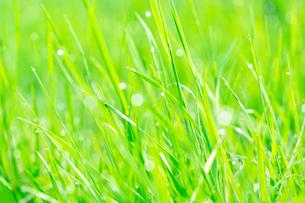 朝露に輝く野草の写真素材 [FYI03753069]