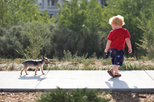 Full length of baby boy walking with puppy on footpath in parkの写真素材 [FYI03754578]