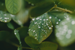 High angle close-up of water drops on plants during rainy seasonの写真素材 [FYI03755610]