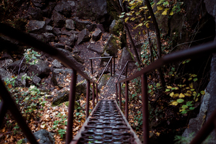 High angle view of empty metallic walkway in forest during autumnの写真素材 [FYI03755771]