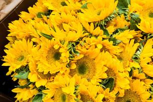 sunflowers sellingの写真素材 [FYI03756361]