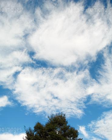 木の上に浮かぶ綿雲の写真素材 [FYI03756553]