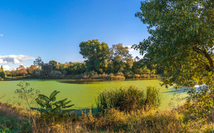 Panoramic view of the Old dirty green pond covered with duckweed and mud in a summer dayの写真素材 [FYI03756673]