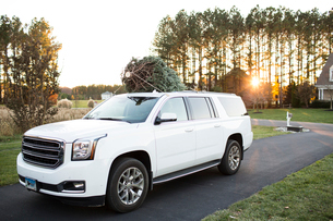 Wide View of Fresh Cut Christmas Tree on top of White SUV at Sunsetの写真素材 [FYI03758927]