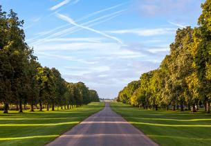 The Long Walk, Windsor, Berkshireの写真素材 [FYI03759603]
