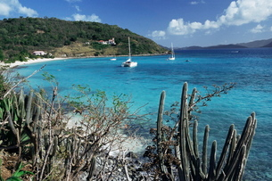 White Bay, Jost van Dyke, British Virgin Islands, Caribbeanの写真素材 [FYI03759626]