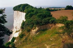 Chalk cliffs, Mons Klint, Mon, Denmark, Scandinaviaの写真素材 [FYI03759694]