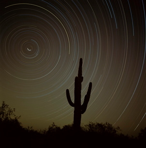 Star tracing over cacti, tracing stars as they move round North Star, Tucson, Arizonaの写真素材 [FYI03759908]