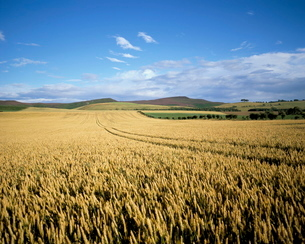 Agricultural landscape, north of Rothbury, Northumberlandの写真素材 [FYI03760041]