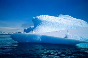 Adelie penguins on iceberg, Antarcticaの写真素材 [FYI03760084]