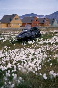 Arctic cotton grass and snowmobile, Longyearbyen, Spitsbergen (Svalbard), Norway, Scandinaviaの写真素材 [FYI03760111]