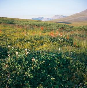 Landscape near ancient village of Itygran, Chukchi Peninsula, Russian Far East, Russiaの写真素材 [FYI03760124]