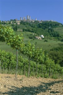 Vineyards below the town of San Gimignano, Tuscanyの写真素材 [FYI03760534]