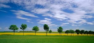 Oil seed fields in early summer, Champagne regionの写真素材 [FYI03760542]