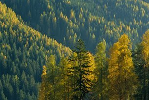 Autumn colours, Dolomites, Trentino-Alto Adigeの写真素材 [FYI03760549]