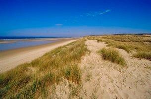 Dunes at Hardelot Plage, near Boulogne, Pas-de-Calaisの写真素材 [FYI03760740]