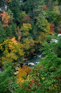Aerial view over river running through the Linville Gorge and autumnal forest canopy, Blue Ridge Parの写真素材 [FYI03760767]