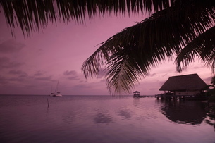 People in beach bar near the Moorings at sunset, Placencia, Belizeの写真素材 [FYI03760968]