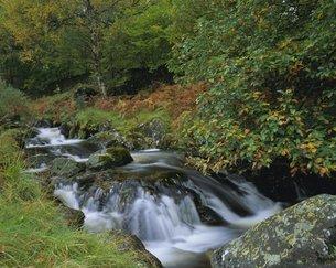 Barrow Beck and autumnal woodland near Ashness Bridge, Borrowdale, Lake District National Park, Cumbの写真素材 [FYI03761068]