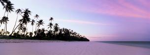 Palm trees in silhouette near Bweju, island of Zanzibar, Tanzaniaの写真素材 [FYI03761203]