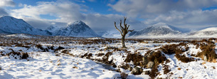 Panoramic view over snow-covered Rannoch Moor towards distant mountains with dead tree bathed in winの写真素材 [FYI03761343]
