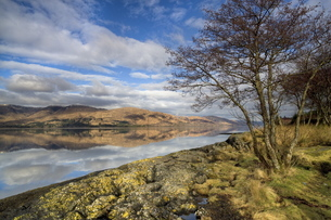 Loch Linnhe in flat calm winter weather with reflections of distant mountains and tree-lined shoreliの写真素材 [FYI03761354]