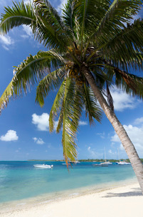 Beach scene with palm trees, blue sky and boats moored on the Indian Ocean at Trou D'eu Douce, a vilの写真素材 [FYI03761409]