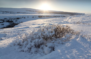 Snow-covered winter landscape near Gullfoss Waterfall, Icelandの写真素材 [FYI03761492]