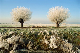 Frost covered trees and landscape, Whittlesy, near Peterborough, Cambridgeshireの写真素材 [FYI03761514]