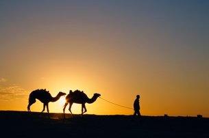 Camels and guide, Zaafrane, Tunisiaの写真素材 [FYI03761527]